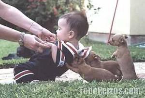 Niños de la Sala Cuna con perros de terapia