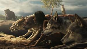 Uno de los dos lobos alimenta mejor